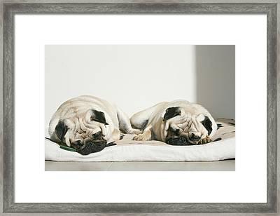 Sleeping Pug Dogs Framed Print by Elli Luca