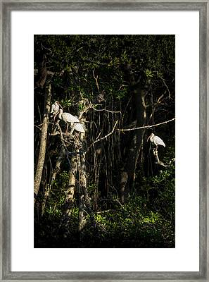 Sleeping Quarters Framed Print by Marvin Spates