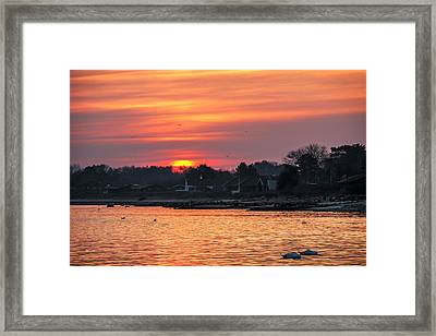 Sleeping Swans At Sunrise Framed Print by Kim Lessel