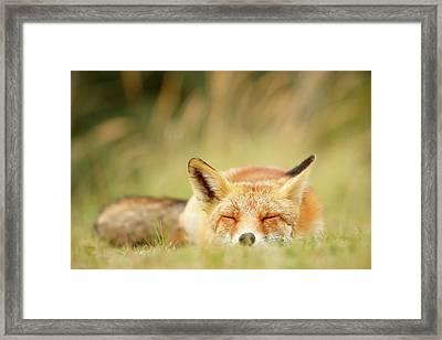 Sleepy Fox Is Sleepy IIi Framed Print by Roeselien Raimond