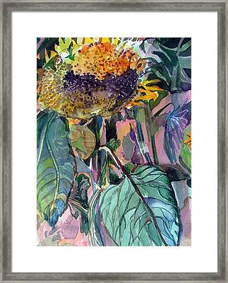 Sleepy Sunflower Framed Print by Mindy Newman