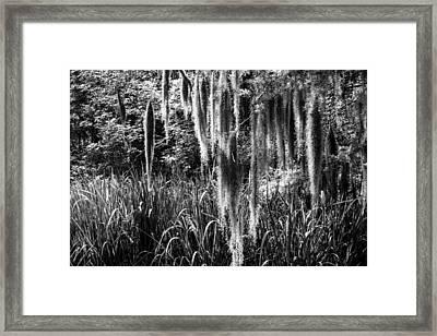 Slidell Spanish Moss Framed Print by Glenn DiPaola