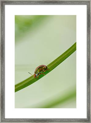 Slippery Dip Framed Print by Az Jackson