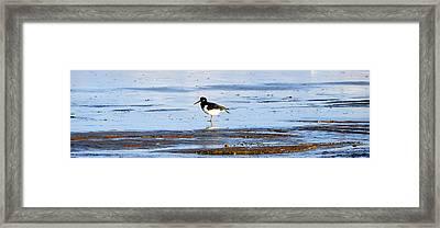 Small Bird Framed Print by Svetlana Sewell