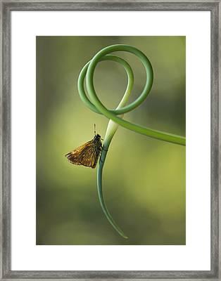 Small Butterfly Sitting On Garlic Flower Framed Print by Jaroslaw Blaminsky