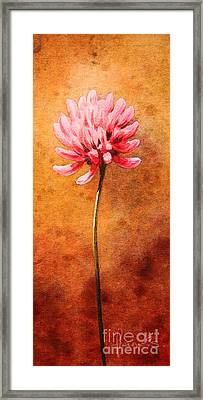 Small Clover Framed Print by John Francis
