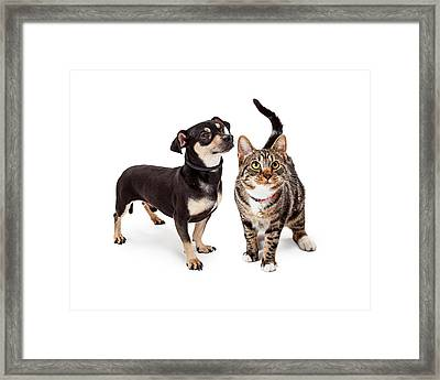 Small Dog And Cat Looking Up Together Framed Print by Susan  Schmitz