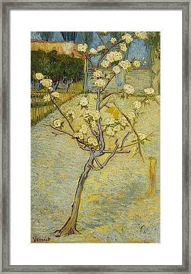 Small Pear Tree In Blossom Framed Print by Vincent van Gogh