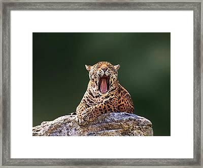 Smile Framed Print by Ivan Vukelic