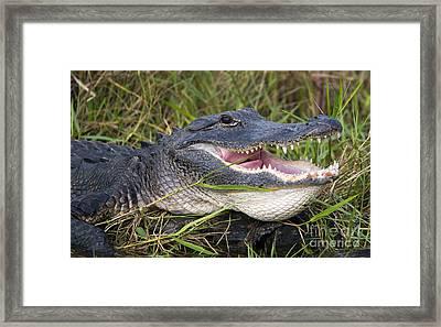 Smile Framed Print by Mike Dawson