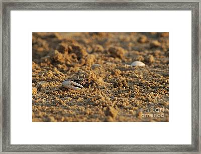 Smiley Crab Portrait Framed Print by Angelo DeVal