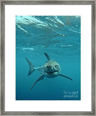 Smiley Shark Framed Print by Crystal Beckmann