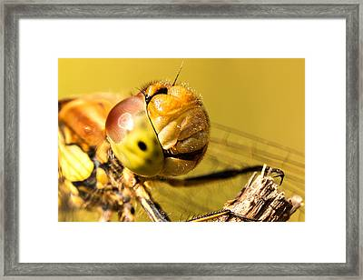 Smiling Dragonfly Framed Print by Ian Hufton