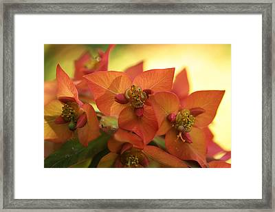 Smouldering Embers Framed Print by Connie Handscomb