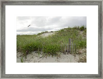 Smugglers Beach Dune South Yarmouth Cape Cod Massachusetts Framed Print by Michelle Wiarda