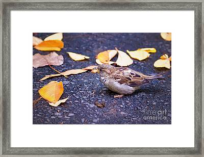 Snack Time Framed Print by Anna Serebryanik