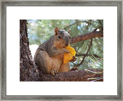 Snack Time Framed Print by Ernie Echols