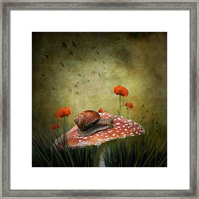Snail Pace Framed Print by Ian Barber