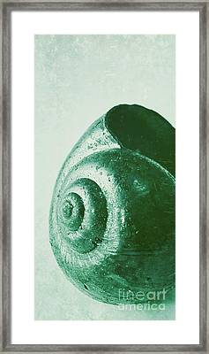 Snail Shell Framed Print by Angela Doelling AD DESIGN Photo and PhotoArt