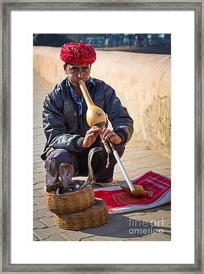 Snake Charmer Framed Print by Inge Johnsson
