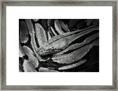 Snake Framed Print by Fine Arts