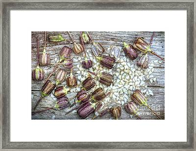 Snakes Head Fritillary Seeds Framed Print by Tim Gainey