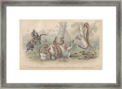 Snakes Framed Print by Oliver Goldsmith
