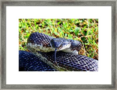 Snakey Lick Framed Print by Kathryn Meyer
