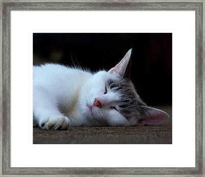 Snooze Framed Print by Jai Johnson