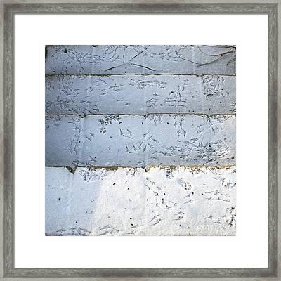 Snow Bird Tracks Framed Print by Karen Adams
