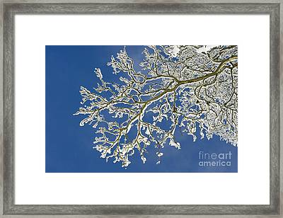 Snow Branch Framed Print by Tim Gainey