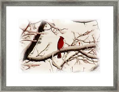 Snow Cardinal Framed Print by Janet Pugh