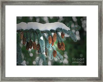Snow Cones Framed Print by Sharon Talson