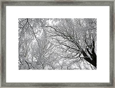 Snow Covered Tree Framed Print by Richard Newstead
