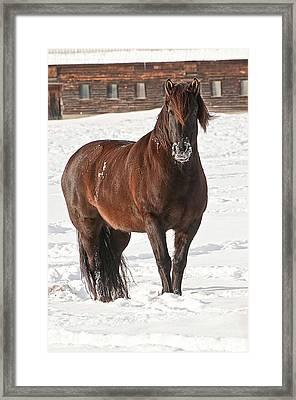 Snow Horse Framed Print by Michael Cummings