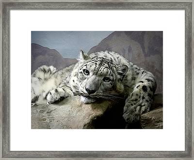 Snow Leopard Relaxing Digital Art Framed Print by Ernie Echols