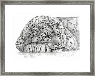 Snow Leopard Framed Print by Svetlana Ledneva-Schukina