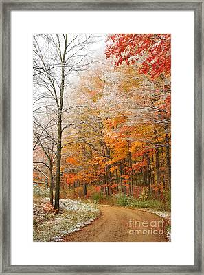 Snow On Autumn Trees Framed Print by Terri Gostola