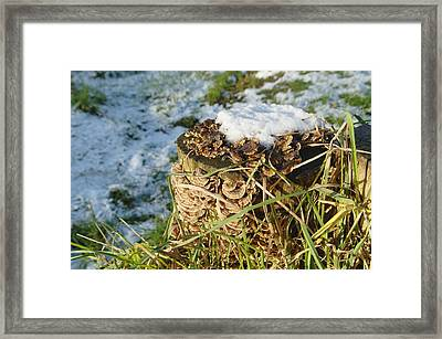 Snow On Stump With Bark Fungus Framed Print by Adrian Wale