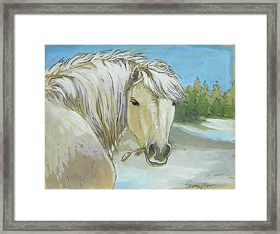 Snow Pony Framed Print by Tracie Thompson