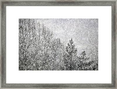 Snow Squawl Framed Print by Laura Mountainspring