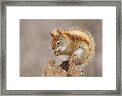 Snow Storm Framed Print by Mircea Costina