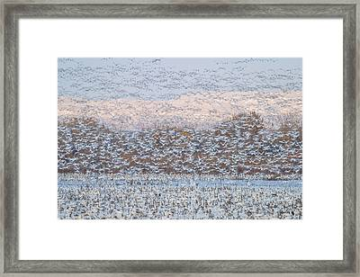 Snow Storm Framed Print by Nick Kalathas
