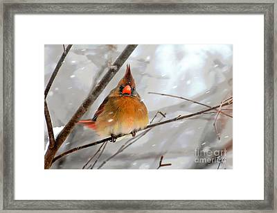 Snow Surprise Framed Print by Lois Bryan
