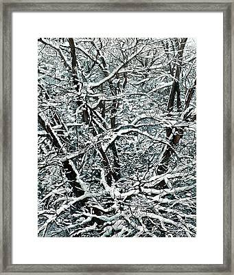 Snow Tree Framed Print by Nadi Spencer