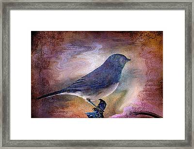Snowbird Stories... Framed Print by Arthur Miller