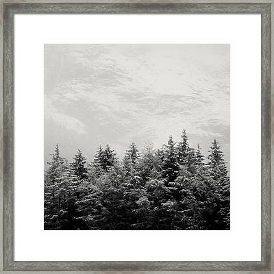 Snowcapped Firs Framed Print by Dave Bowman