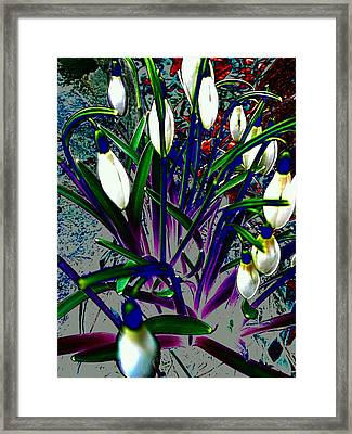 Snowdrops In Abstract  Framed Print by Beth Akerman