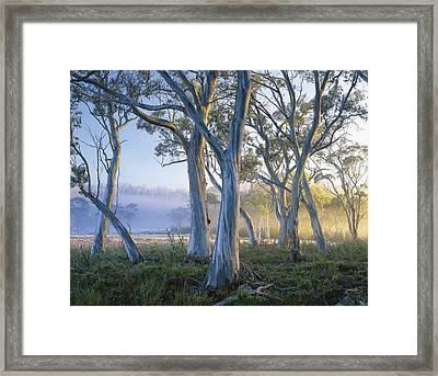 Snowgums At Navarre Plains, South Of Lake St Clair. Framed Print by Rob Blakers