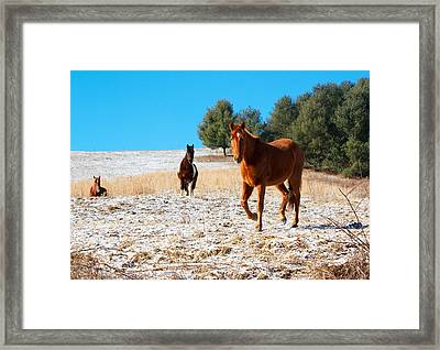Snowy Day Horse Pasture Framed Print by Orange Cat Art